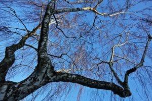 גיזום או כריתת עצים בבית פרטי