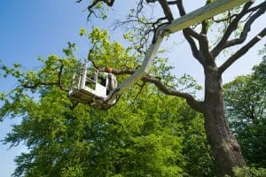 גיזום עצים עם מנוף