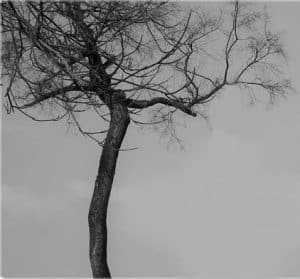 כריתת עצים גבוהים