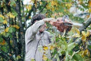 כריתת עצים ראשון לציון