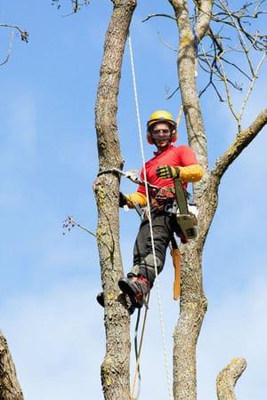 מתמחים בגיזום וכריתת עצים - גיזום פלוס