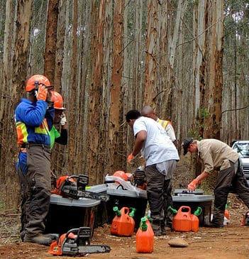 צוות כורתי עצים בפעולה