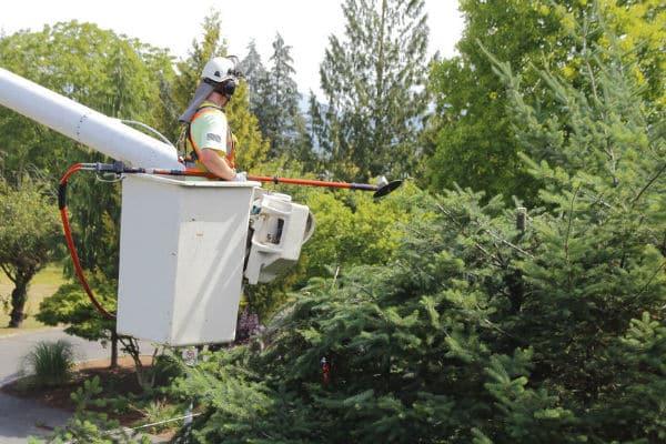 גוזם עצים