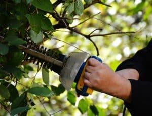 גיזום עצים בחולון
