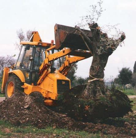העתקת עץ עם טרקטור