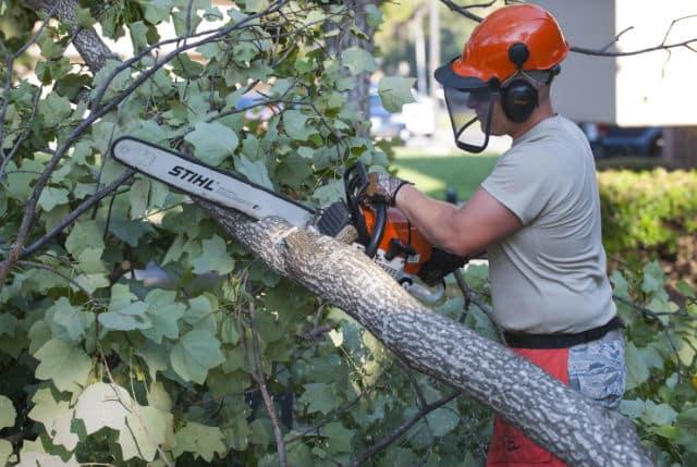 כריתת עצים ברחובות