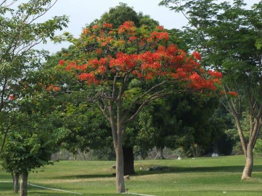 עצים אחרי גיזום