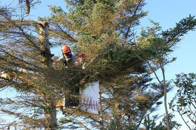 גיזום עצים פתח תקווה