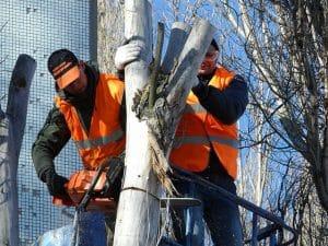 כריתת עץ פתח תקווה