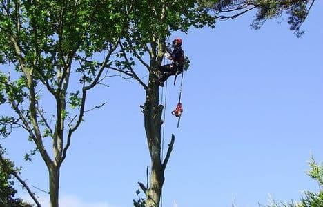 כריתת עצים בהרצליה