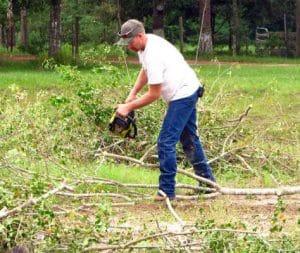 כריתת עצים במודיעין