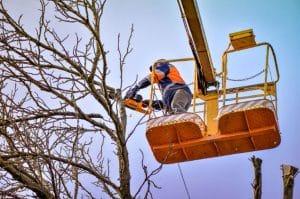 כריתת עץ - בגיזום פלוס מבצעים כריתת עצים ברמת גן