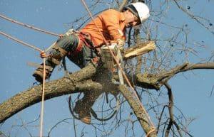 מספקים שירות כריתת עצים באשדוד