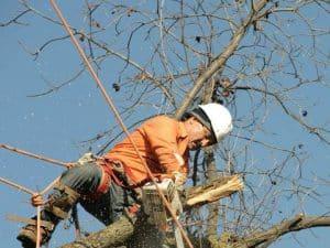 מבצעים גיזום עצים באשדוד