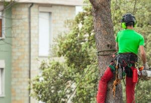 גיזום עצים בנתניה