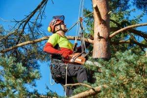 גיזום עצים בבית שמש - גיזום פלוס
