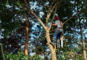 בגיזום פלוס מבצעים גיזום עצים בגן יבנה