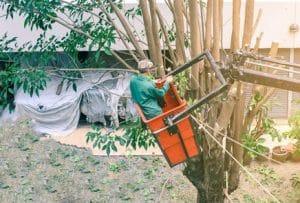 גיזום עצים נס ציונה