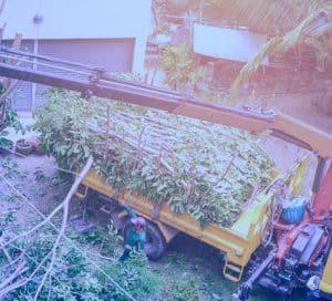 כריתת עצים נס ציונה