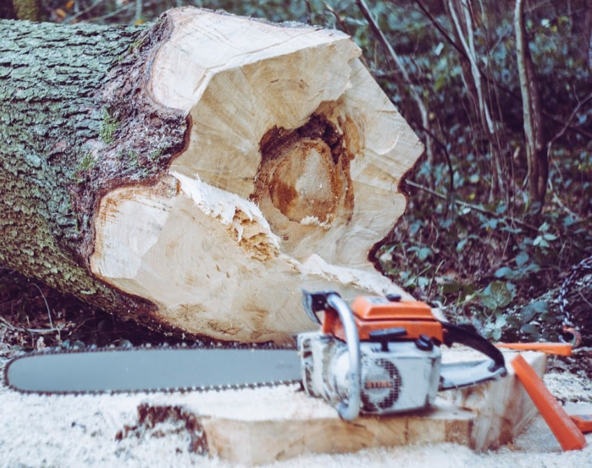 כריתת עץ עם מסור