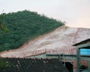 כריתת עצים ללא פיקוח מביאה לבירוא יערות