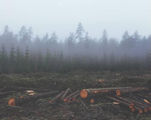 תוצאות של כריתת עצים לא מפוקחת
