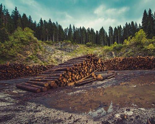 כריתת עצים ללא פיקוח