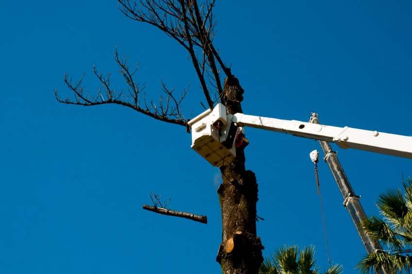 גיזום עץ ונפילת ענף