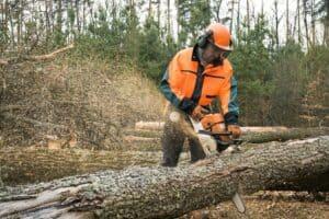 כריתת עץ
