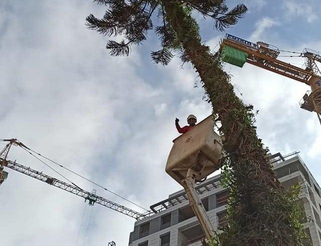 גיזום עץ עם מנוף סל