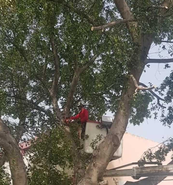 כריתת עצים בגיזום פלוס