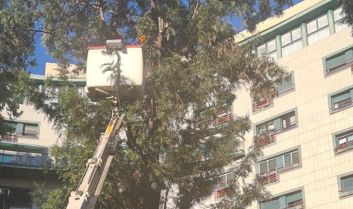 גיזום עצים עם מנוף סל